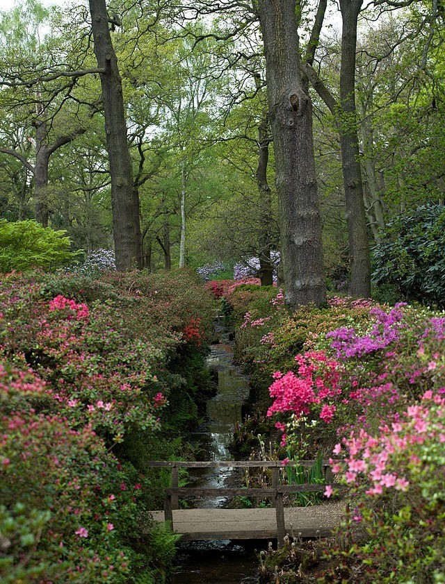 640px-Isabella_Plantation,_Richmond_Park,_London_-_April_2011
