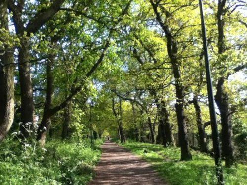 Sydenham Hill Wood and Cox's Walk - Wikipedia